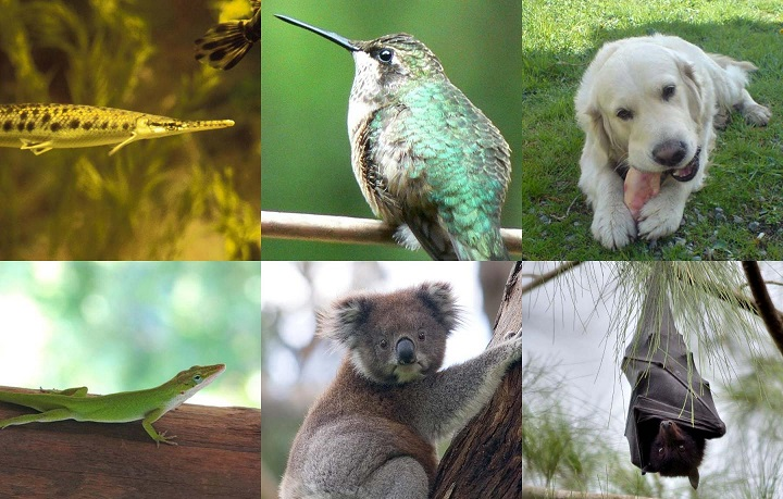 Genome 10K -- Vertebrate 'genomic zoo' to help protect our planet
