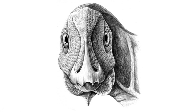 First fossil facial tumor discovered in a dwarf duck-billed dinosaur from Transylvania