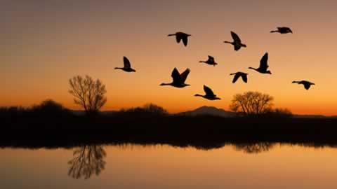 Göçmen Kuşlar ile ilgili görsel sonucu